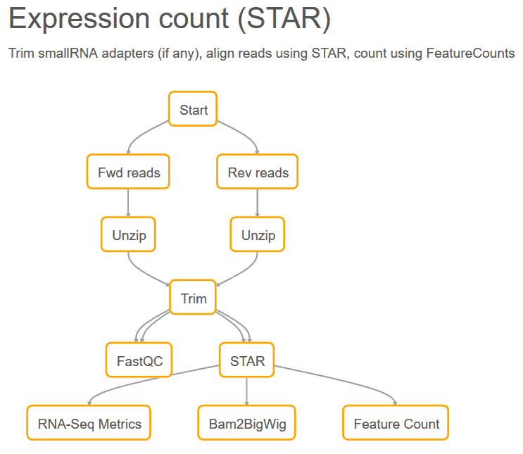 expression count (STAR) workflow